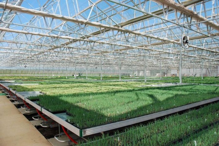 Linx Greenhouse Systems Flood Floor And Flood Bench