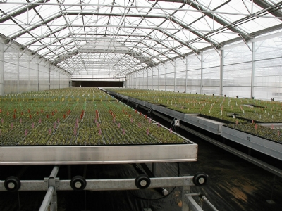 Linx Greenhouse Systems Palletized Rolling Benches