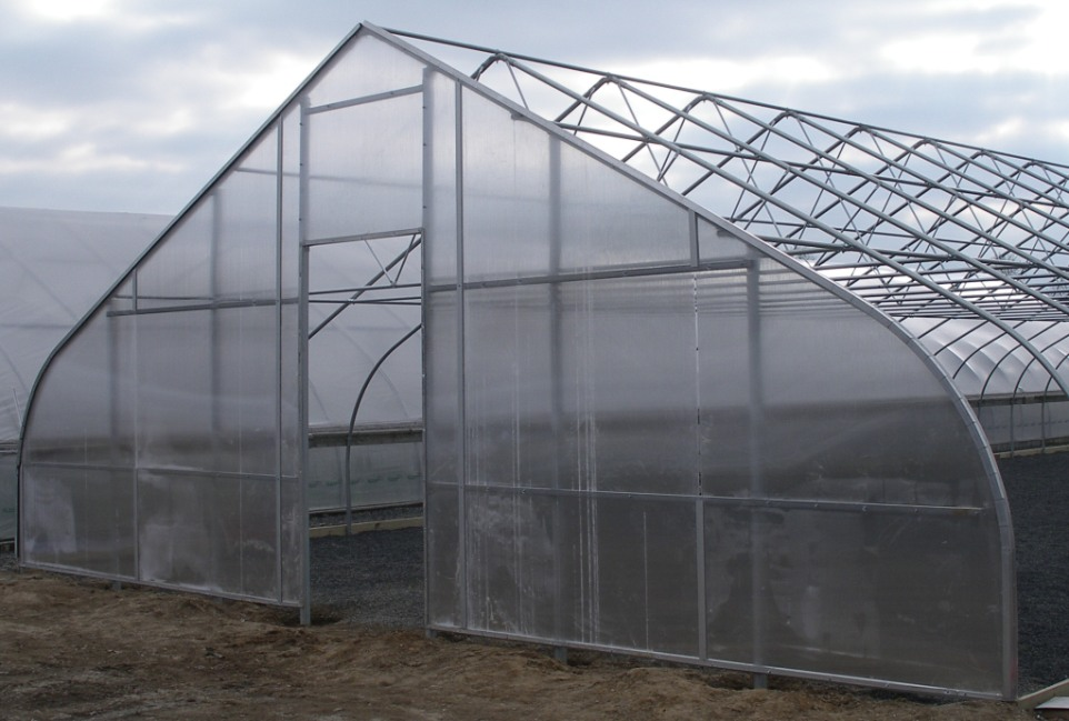 Solutions that Drive Results<p class='marqueetext'>When you need a greenhouse structure that will increase your productivity and improve your bottom line, let us design it for you. We understand growers and growing and can help you with your business.</p>