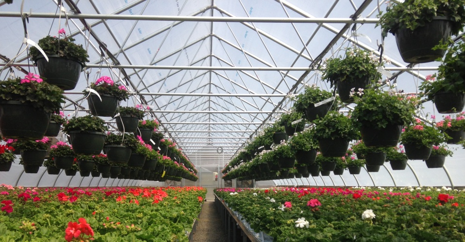 Our Growing Season is All Year Long<p class='marqueetext'>LINX Greenhouses let you grow healthy plants year round. You can increase your productivity with an enclosed environment.</p>